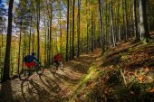 Fotografie Cycling, mountain biker couple on cycle trail in autumn forest.