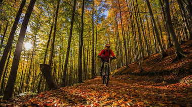 Cycling, mountain biking woman on cycle trail in autumn forest.