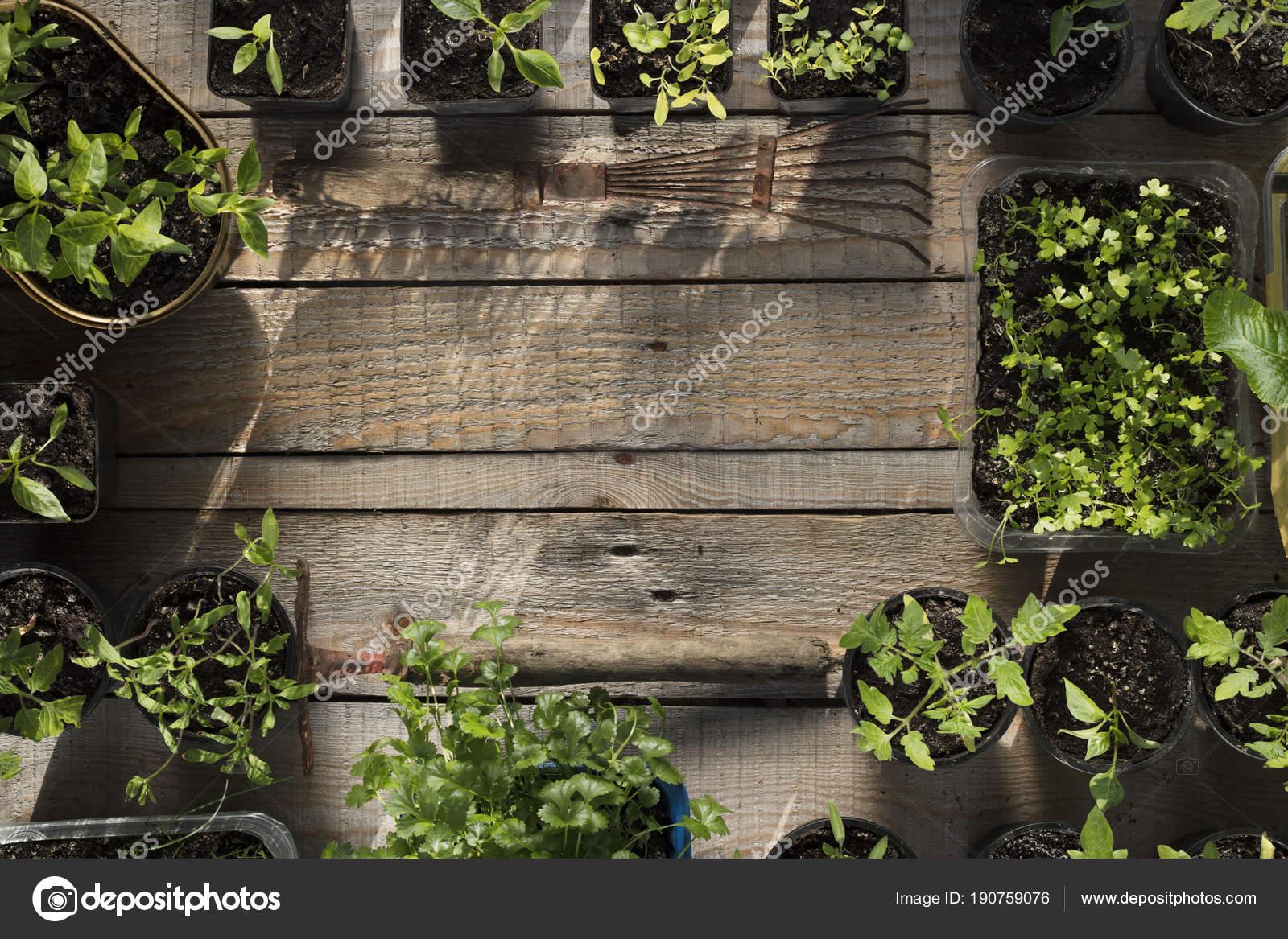 Spring Garden Works Plants Pots Wooden Planks — Stock Photo ...