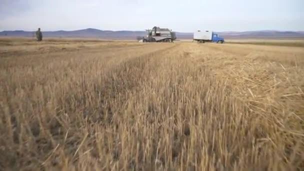 Zemědělství, sklizeň pšenice na farmě