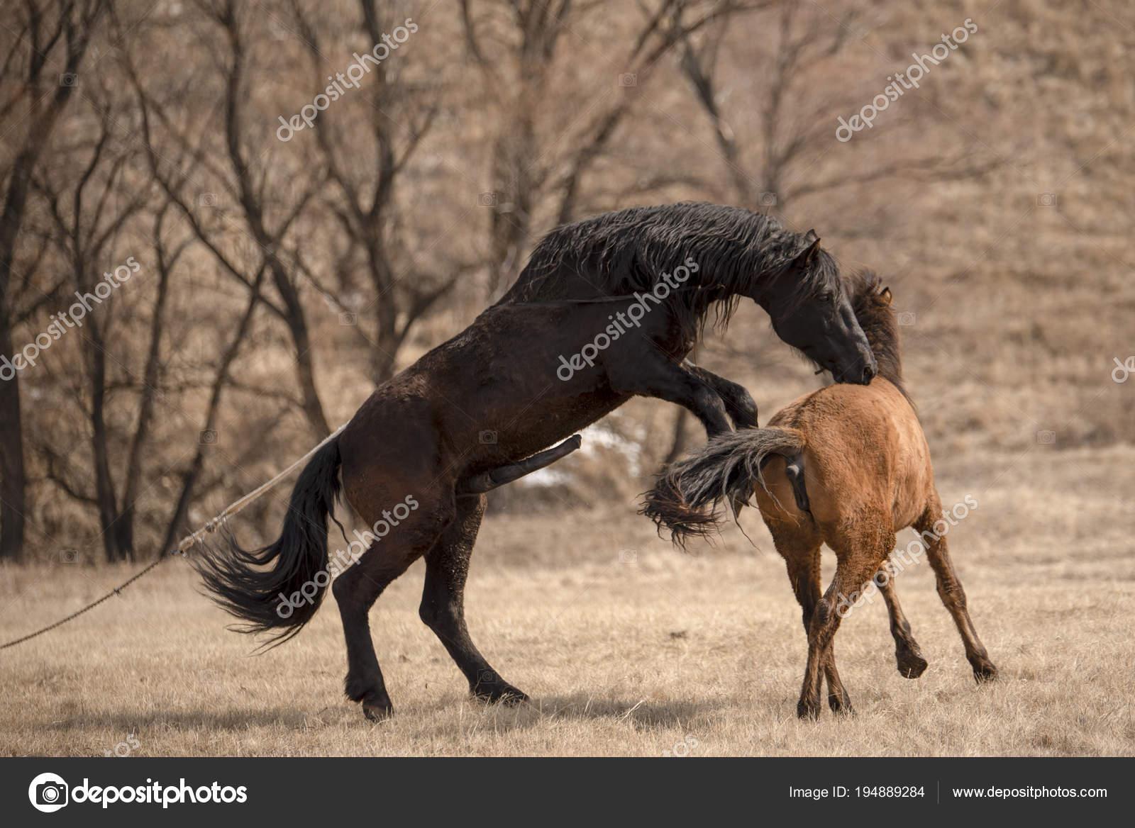 Horse having sex Nude Photos 77