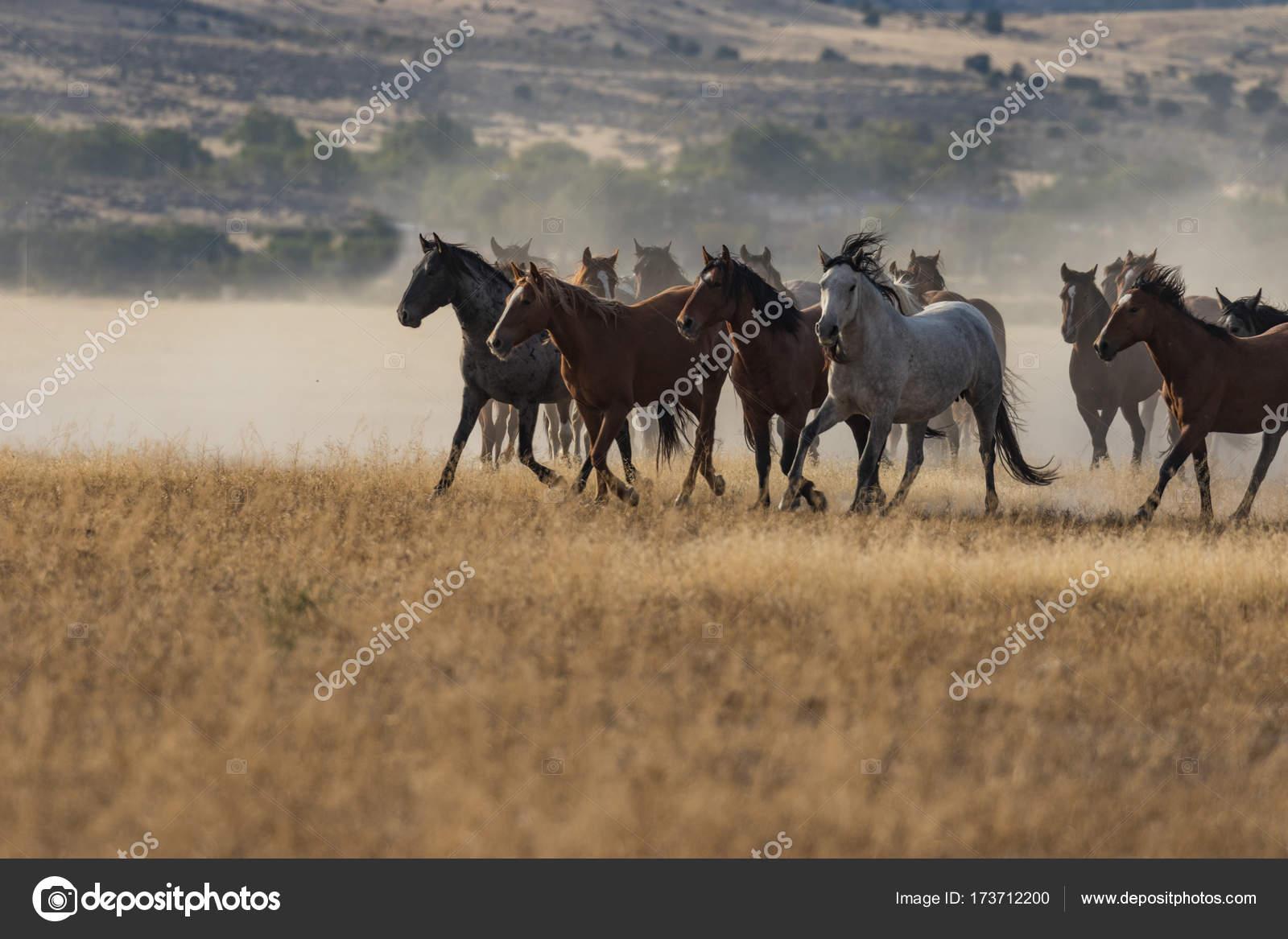 Wild Horses Running Stock Photo C Twildlife 173712200