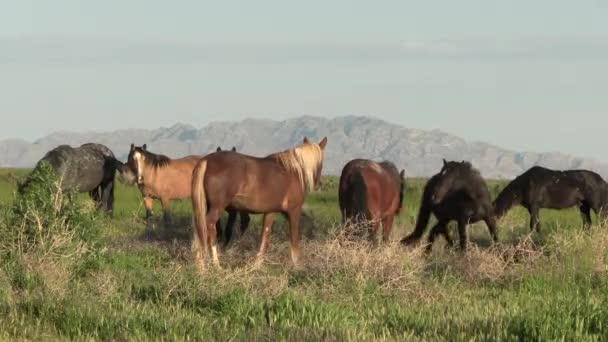 wild horses in spring in the Utah desert in springtime