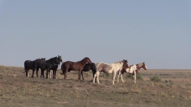 a herd of wild horses in the Utah desert in springtime