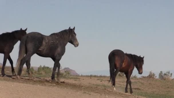 vadlovak a Utah sivatagban tavasszal