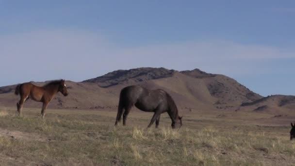 divoké koně na jaře v poušti Utah