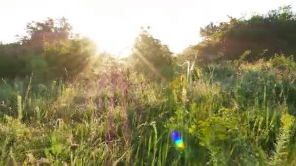 Světlé krajina s trávou a Rosa v slunci. Stabilní záběr v reálném čase. 4k 3840 x 2160