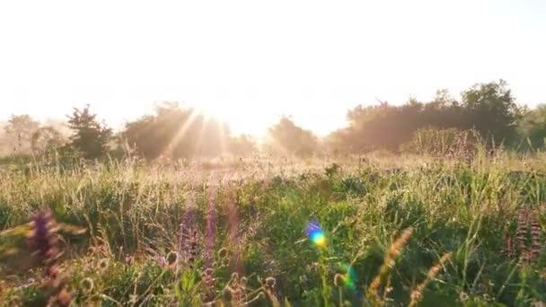 Světlé glade s divoce rostoucí květiny, trávy a rosy. Stabilní záběr v reálném čase. 4k 3840 x 2160