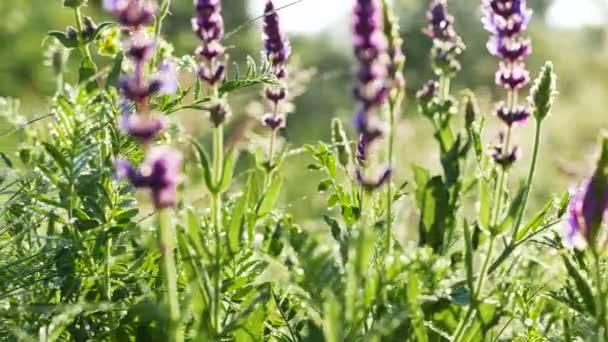 Květiny, trávy a rosy na louce. Reálném čase zblízka střílel dolly. 4k 3840 x 2160