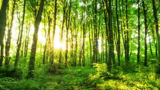 4k. Dřevo s sluneční paprsky. Časová prodleva