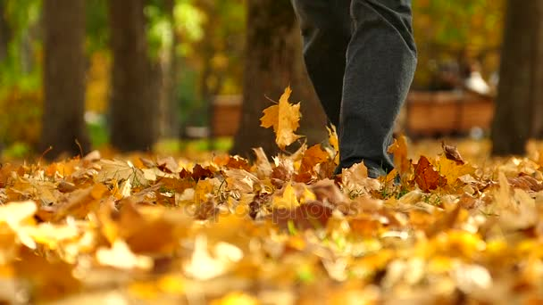 Man walk  in  autumn Central  park with yellow trees. Foots move to camera.