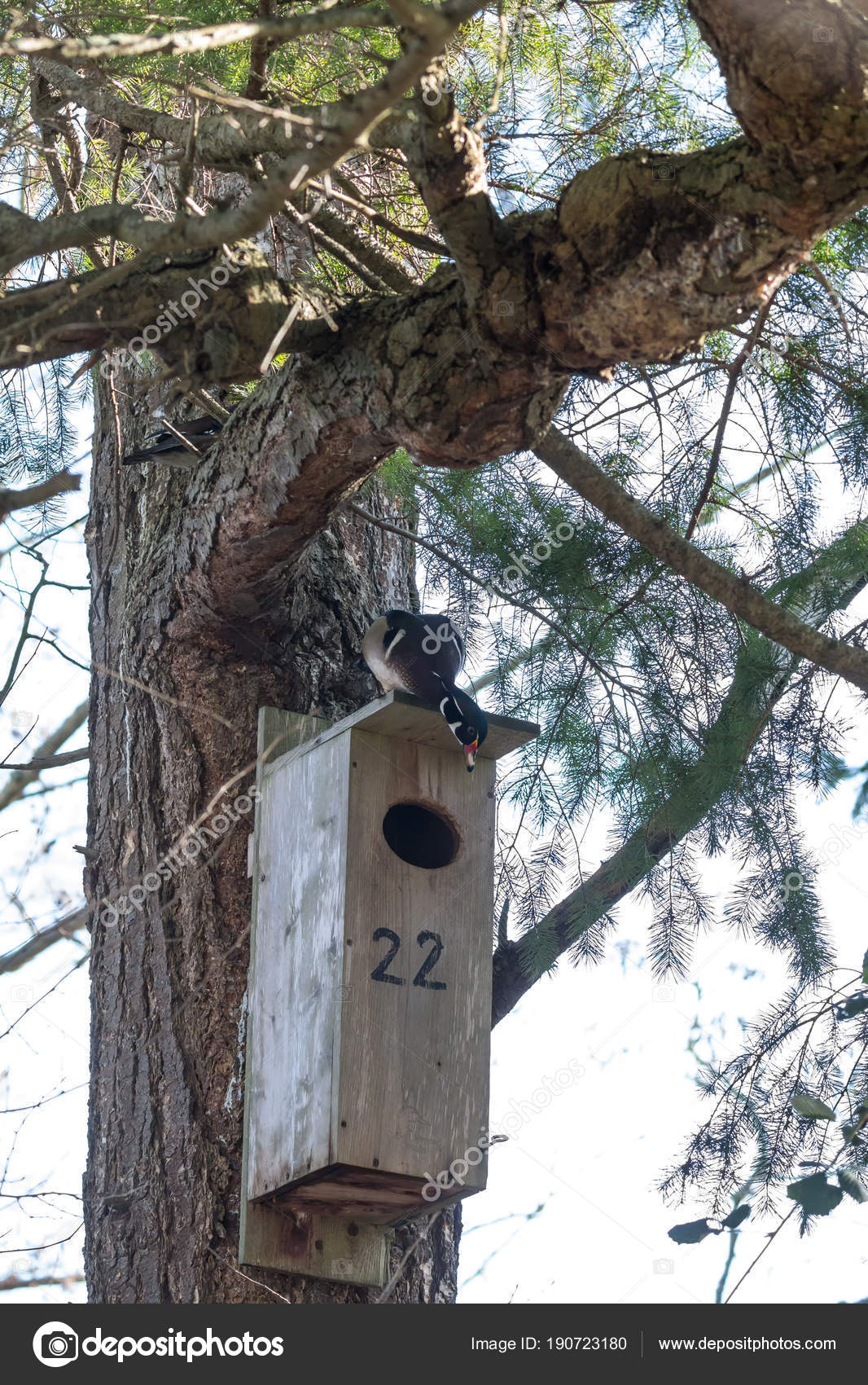 Wood duck nest box canada stock photo devon 190723180 wood duck nest box canada stock photo publicscrutiny Choice Image