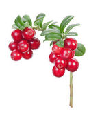 Lingonberries (cowberries, foxberries) isolated on the white bac