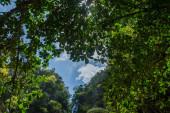 faágakat ellen a természet