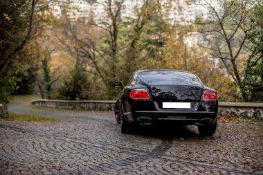 Black car in the summer garden on asphalt,view from behind
