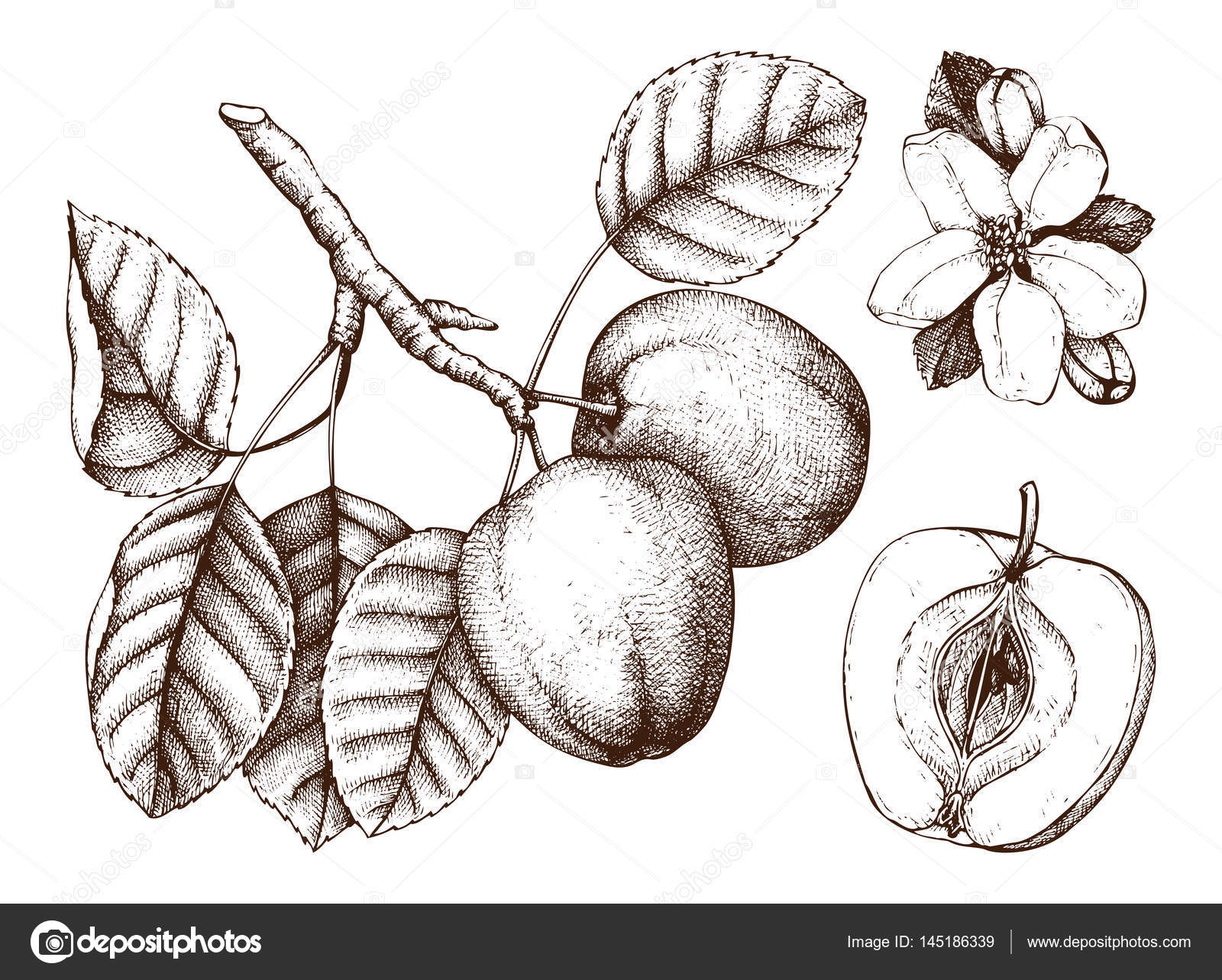 Vintage tree sketch with hand drawn leaves fruit and flower vector drawing