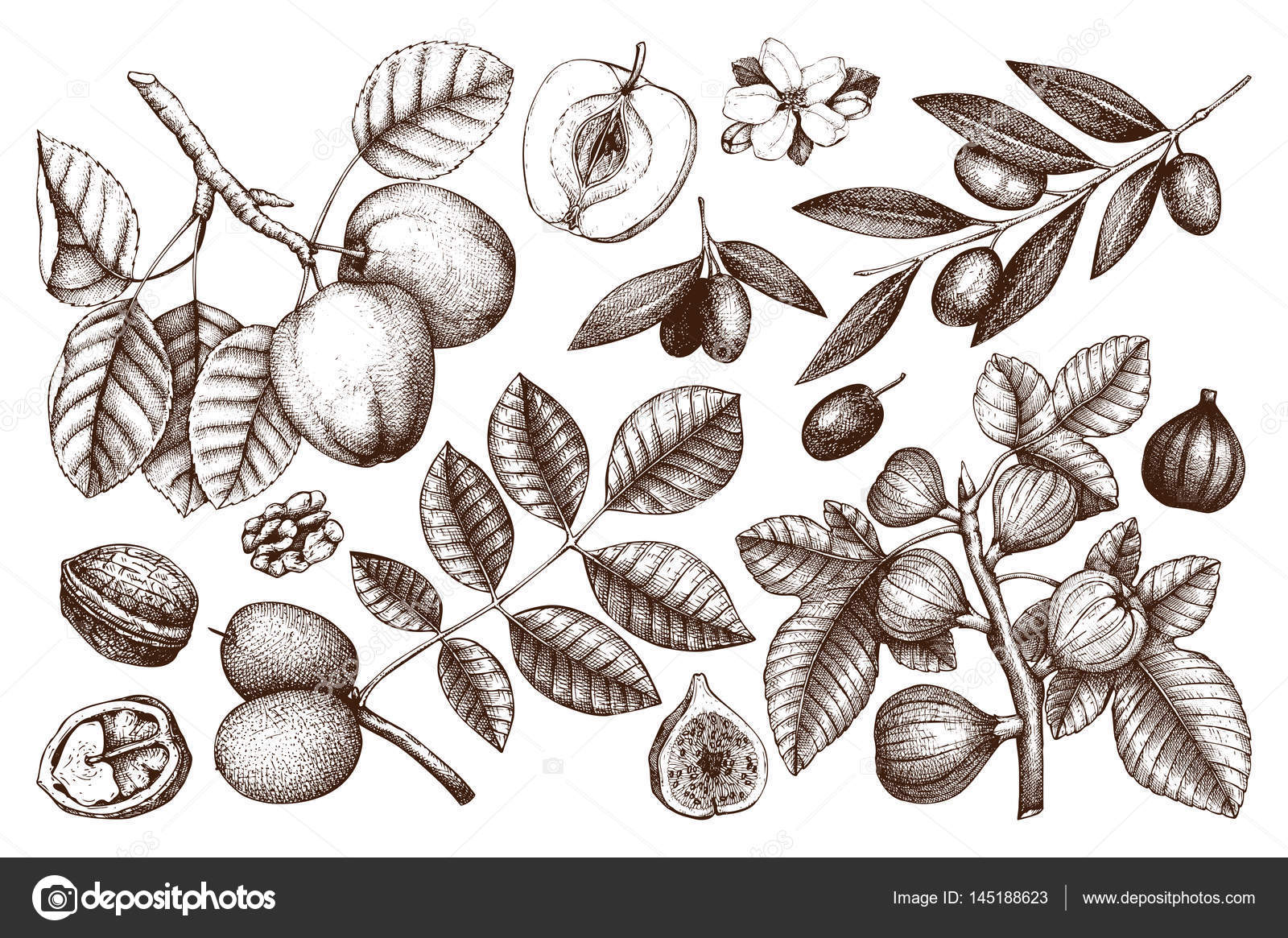 Collection of hand drawn trees illustration stock vector collection of hand drawn trees illustration stock vector altavistaventures Image collections