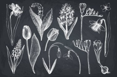 Botanical illustrations of springtime plants