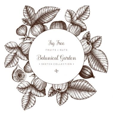 design with hand drawn fig trees branch