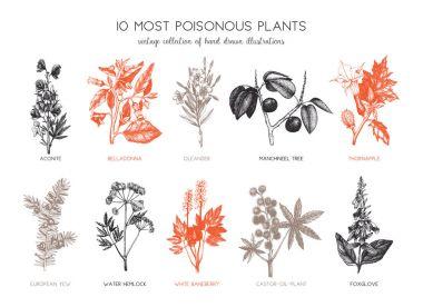 Vintage noxious plants sketch collection