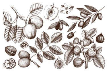 Collection of hand drawn trees illustration.