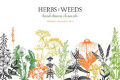 Fotografie hand drawn herbs and weeds illustration