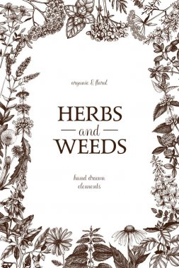 hand drawn herbs and weeds frame
