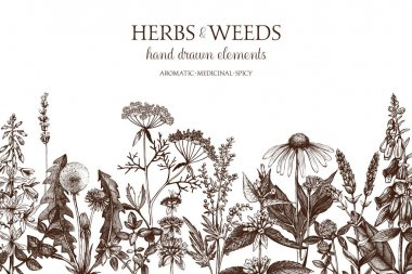 hand drawn herbs and weeds illustration