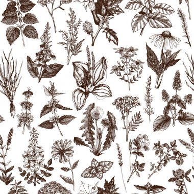 Seamless pattern with hand drawn herbs and weeds collection.