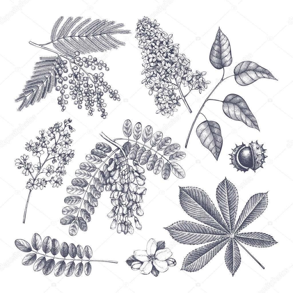 Vintage blooming trees sketch set.