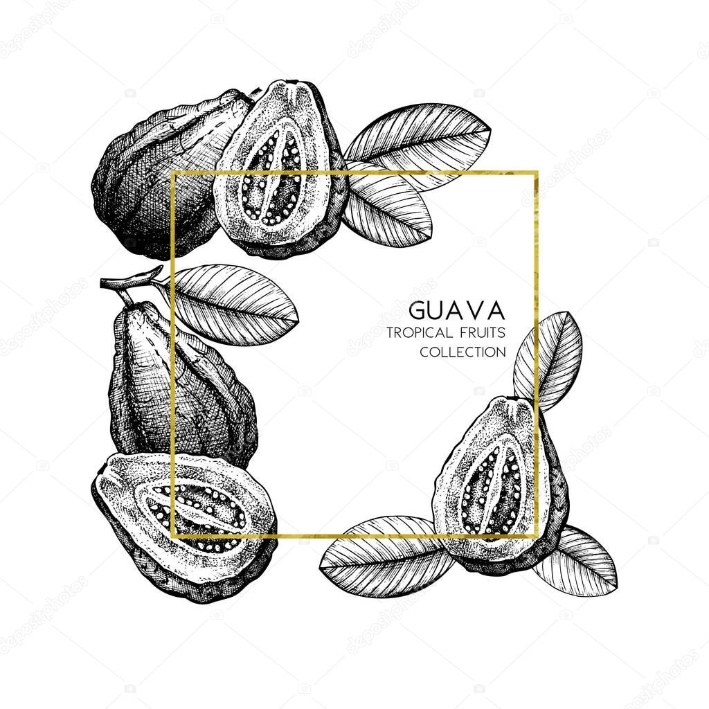 Guava hand drawn illustration.