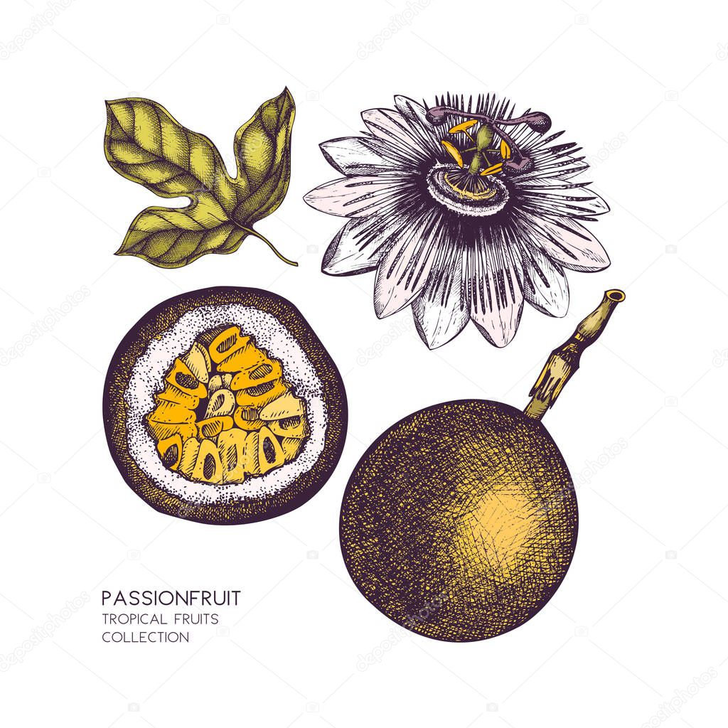 Dark purple passion fruit illustration