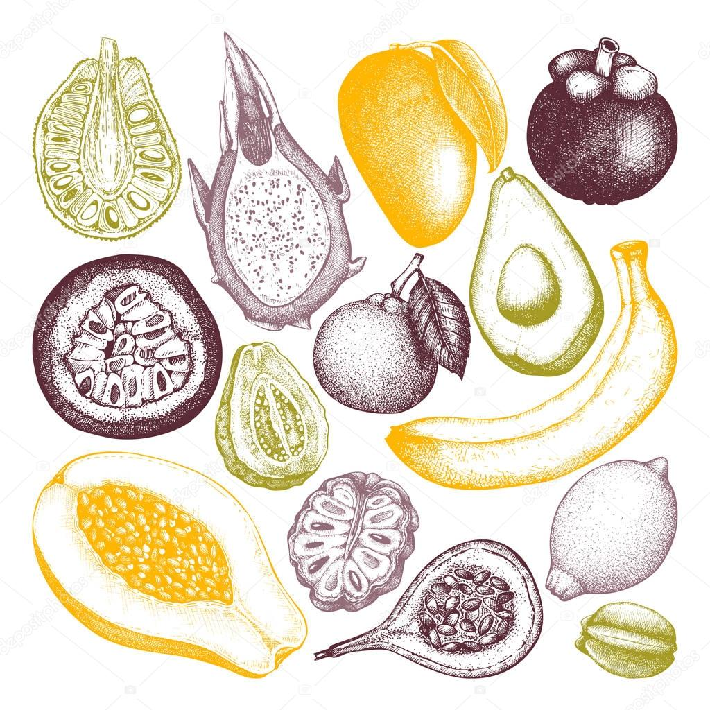 Vector collection of tropical fruits illustration.