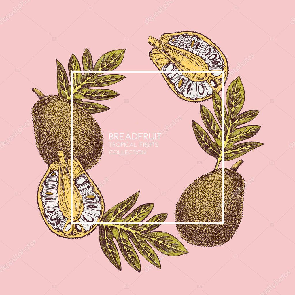 Breadfruit hand drawn illustration.