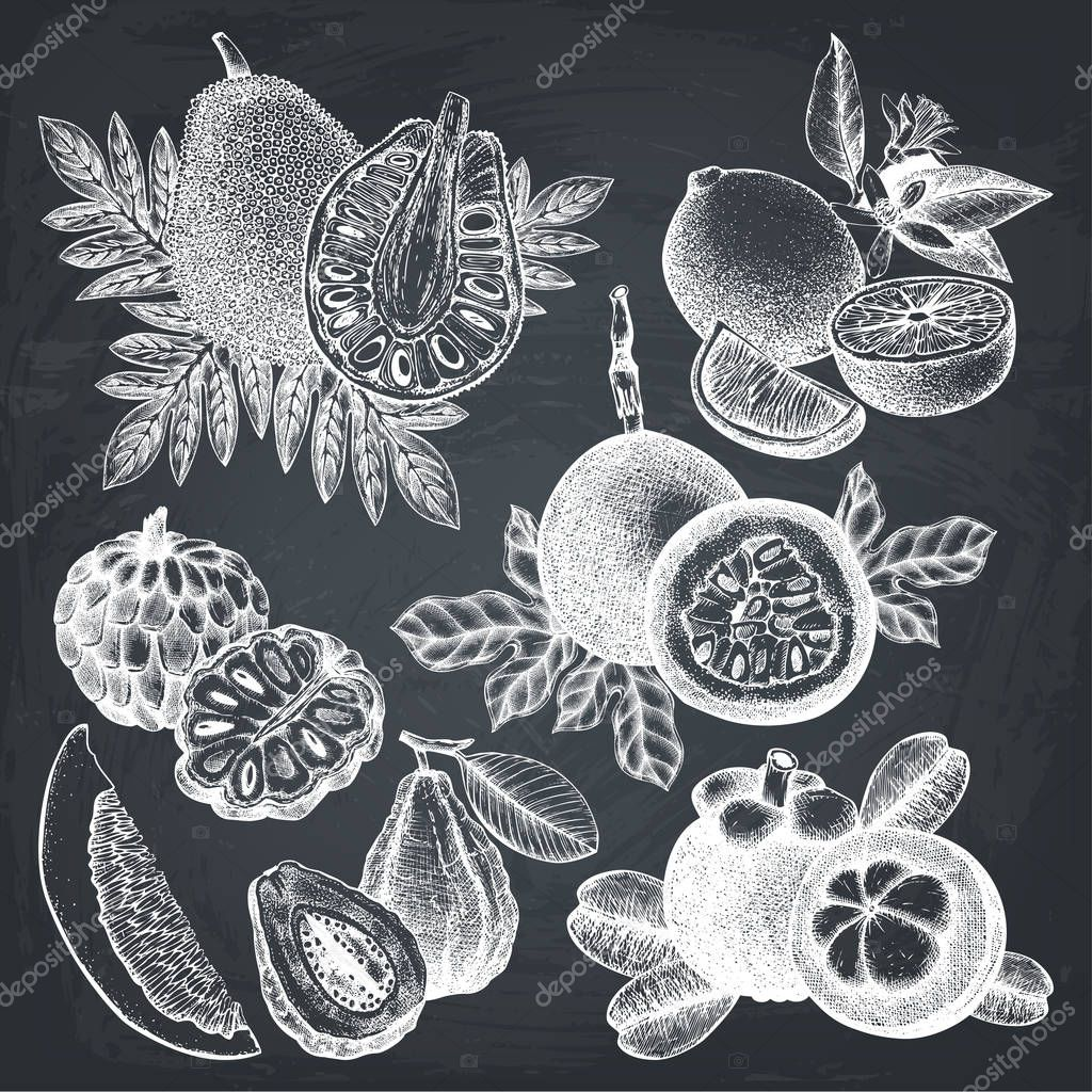 hand drawn tropical fruits collection