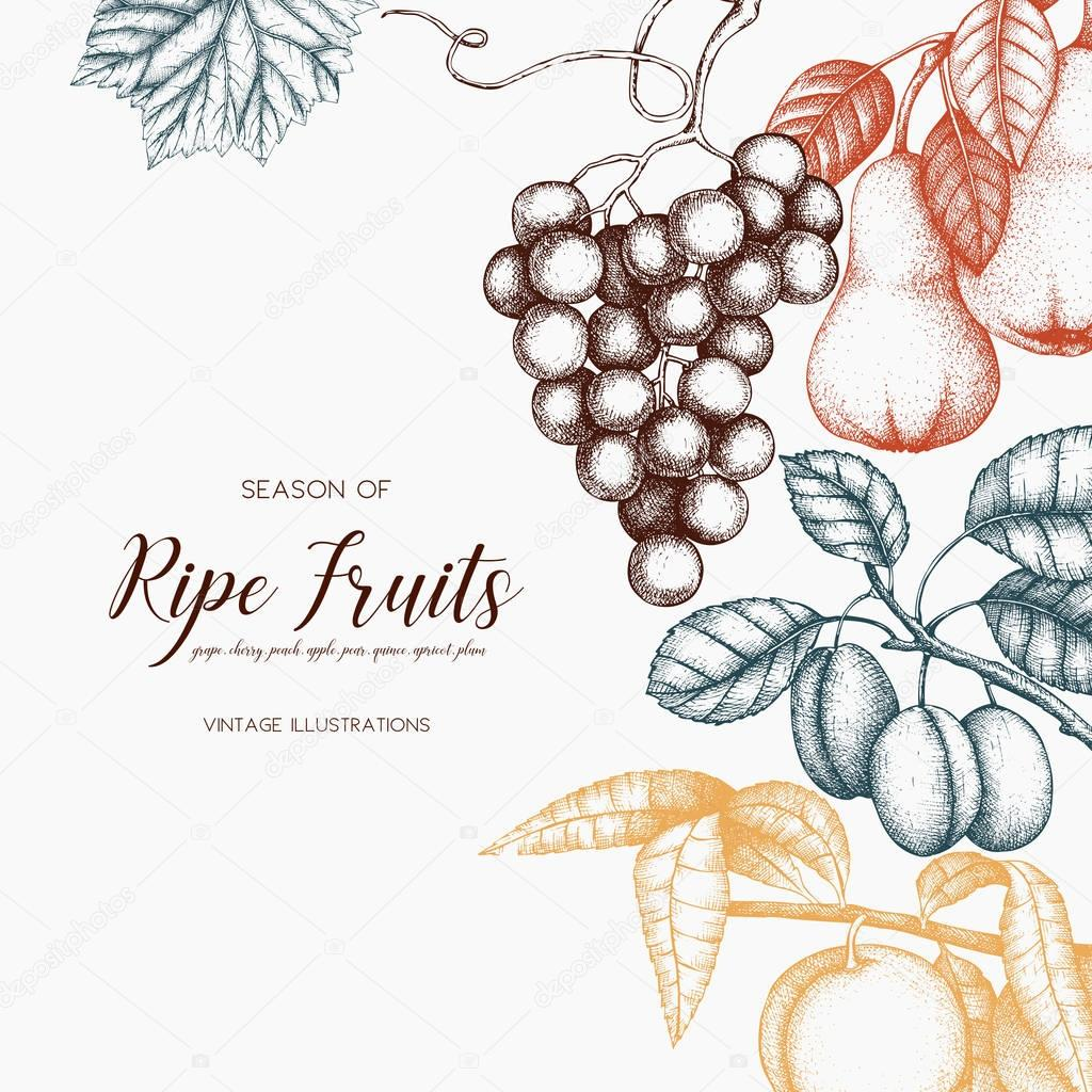Vintage fruits card design.