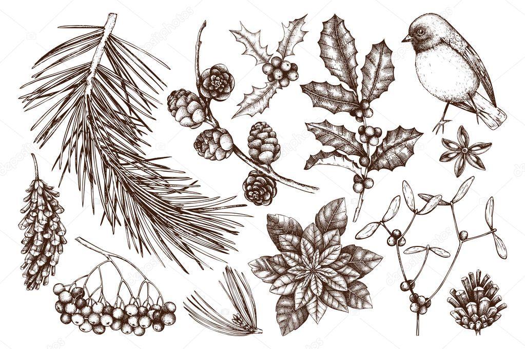 Christmas plants collection