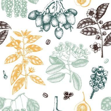 Hand drawn seamless pattern with tonic and spicy plants, vector illustration