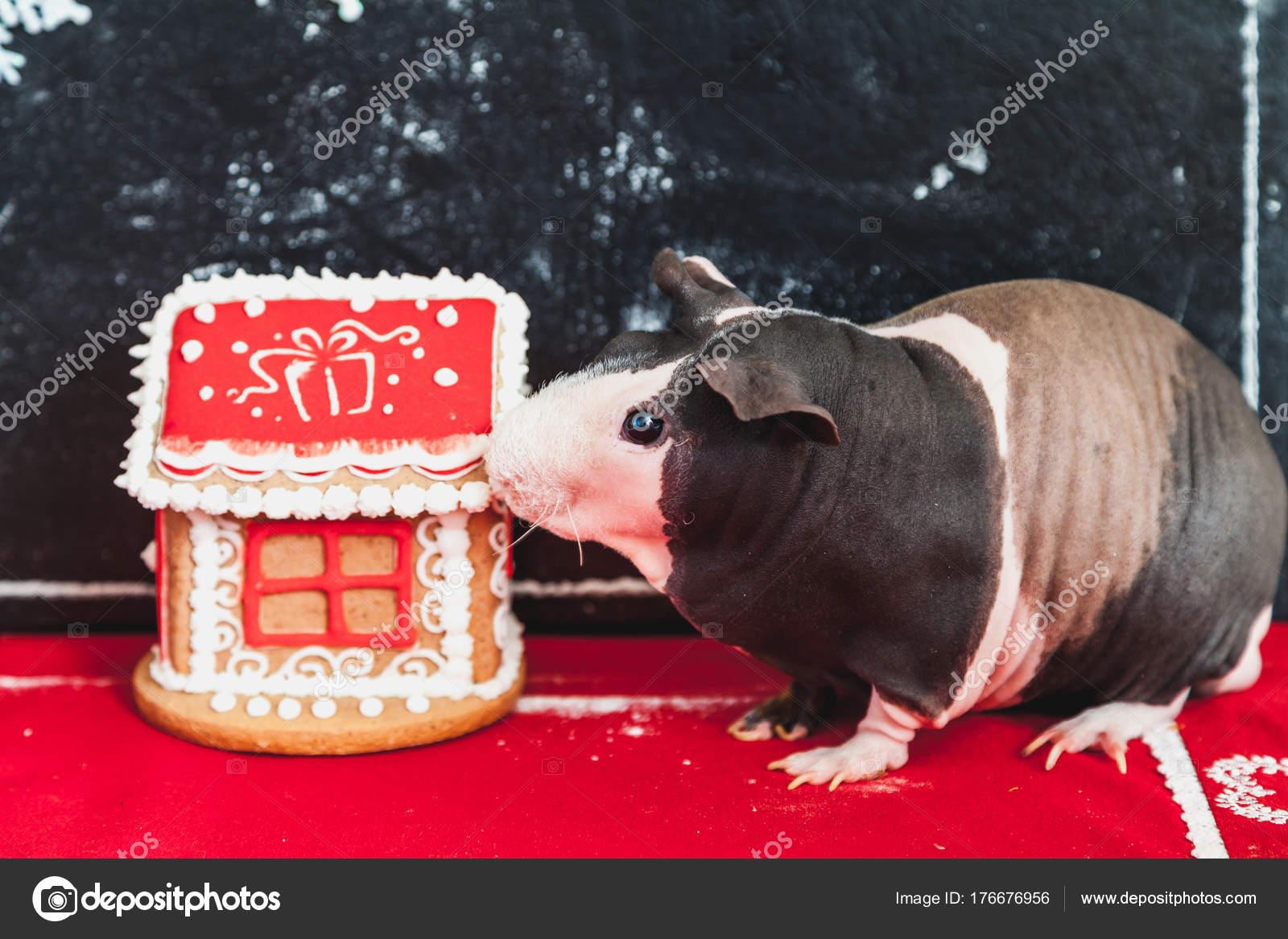 Naken gris