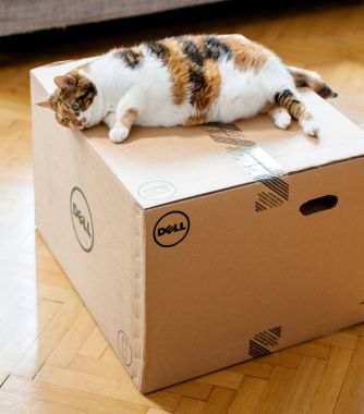 Cat inspecting the DELL computer cardboard box