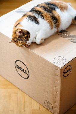 Funny cat sleeping on DELL computer box