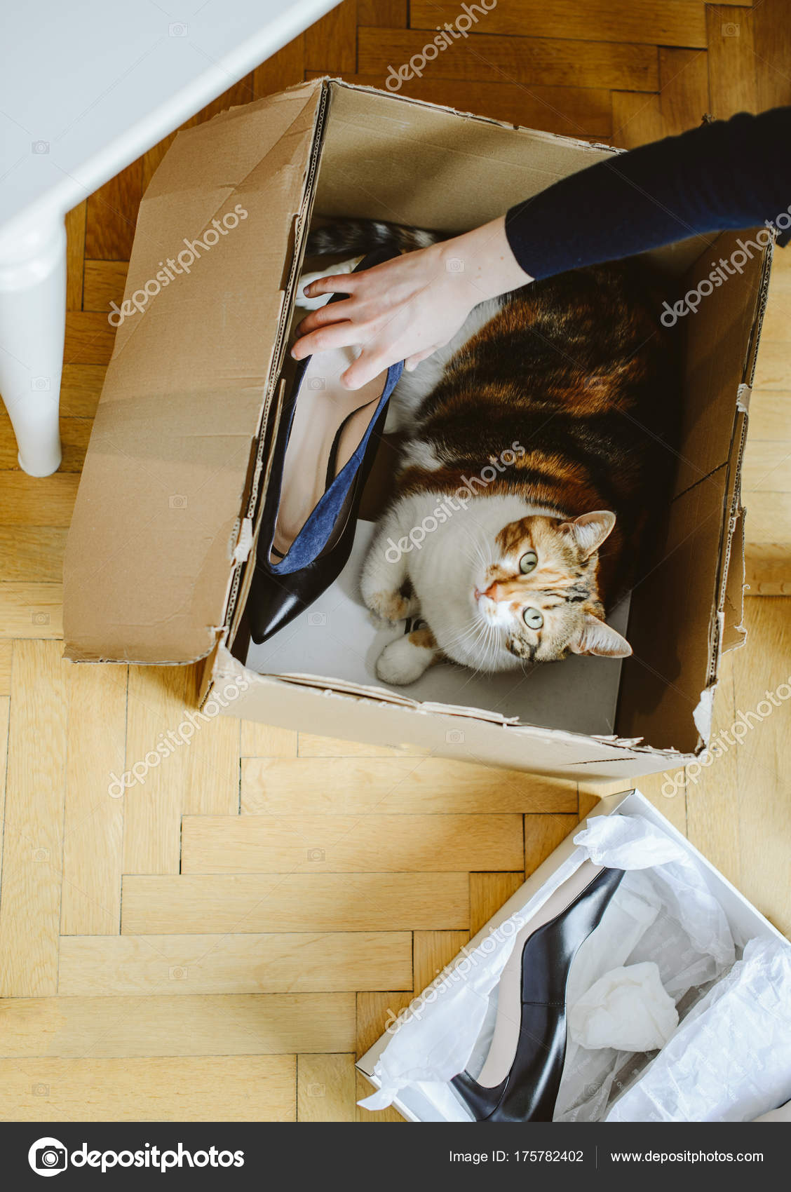 f036e1f1a27f Woman unboxing new shoes with cute home pet cat helping her — Stock Photo