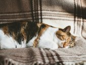 Fotografie adorable kitten deep sleeping on blanket