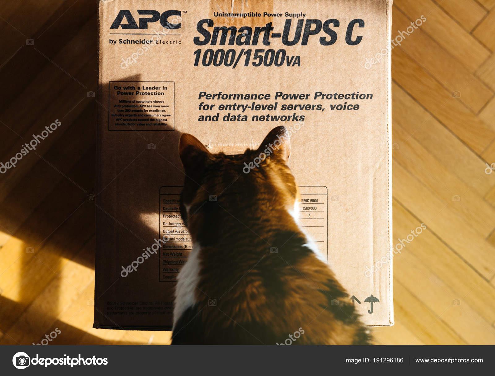 Paris France Mar 2018 Curious Cat Inspecting Apc Smart Ups