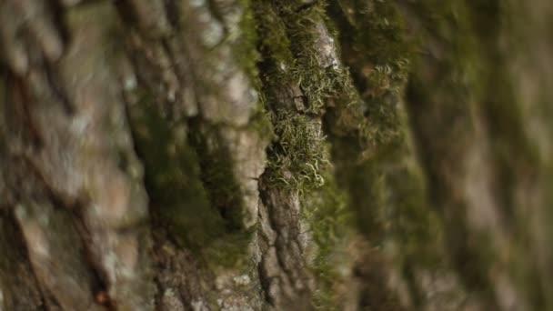 Stromové kůry textury makro