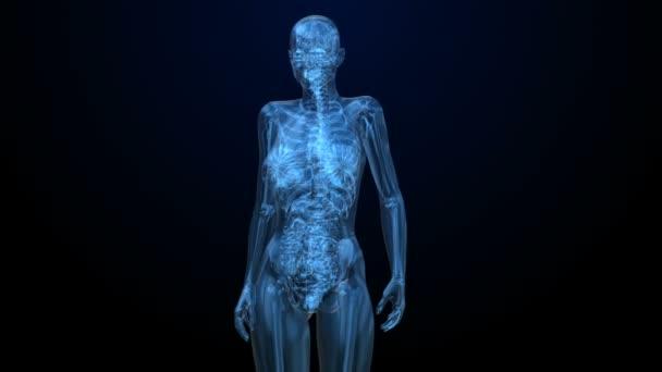 Podrobnosti o ženské břišní orgány v černém rentgenové