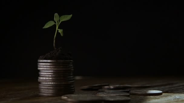 Sprout from coins . Money growth increase concept.