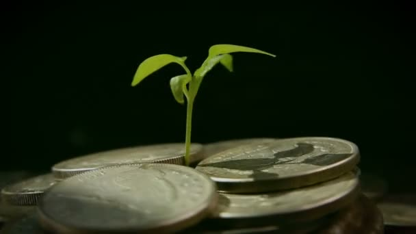 From a handful of coins the plant grows, the concept of growing well-being.