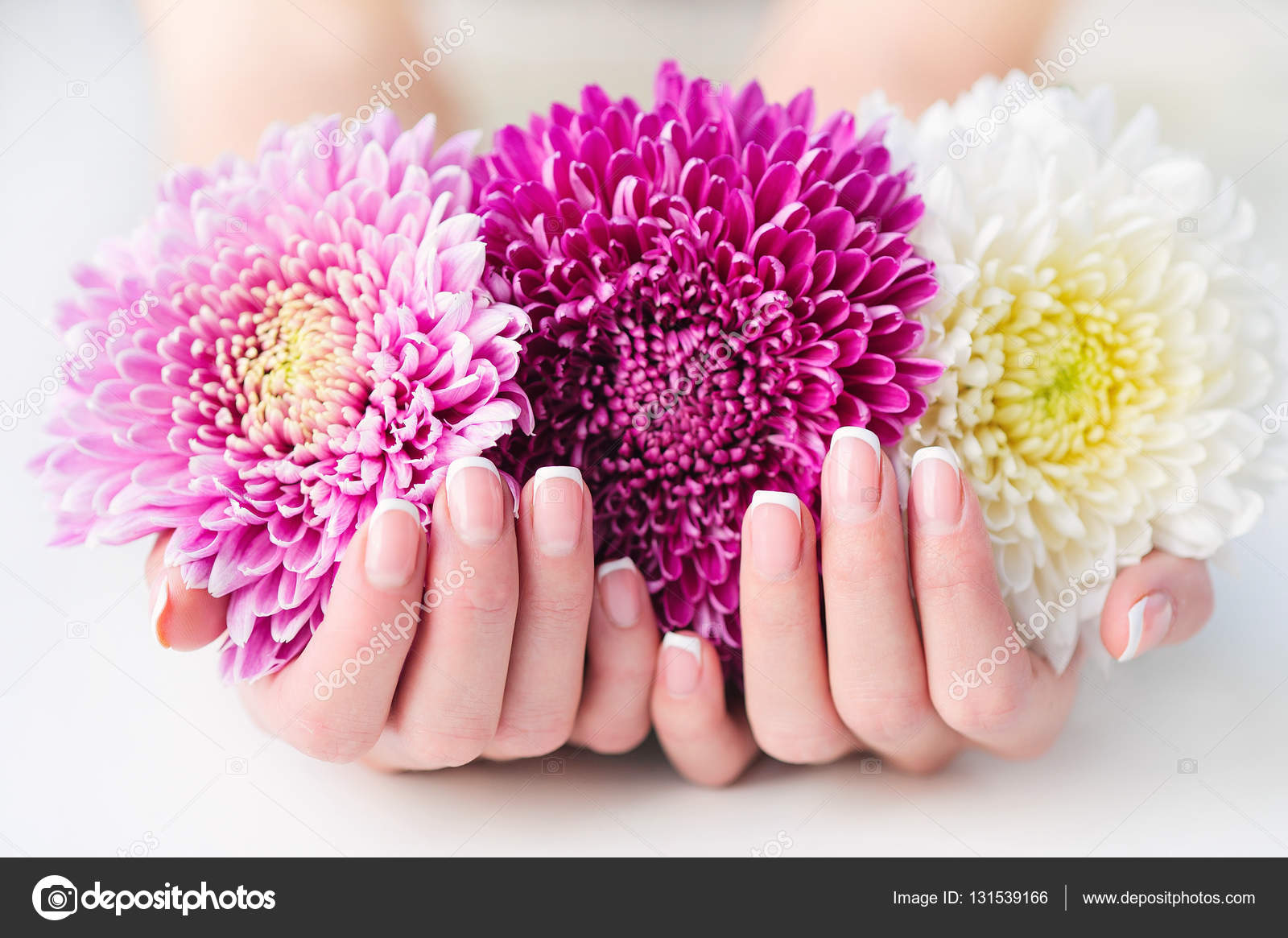 Woman hands with french manicure holding daisy stock photo woman cupped hands with beautiful french manicure holding pink and white flowers photo by zoiakostina mightylinksfo