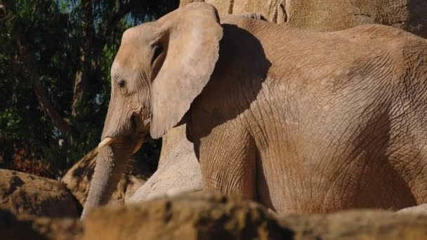 Sivatagi elefántok egy forró nyári napon, ultra hd 4k, valós idejű csoportja